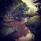 Merri Creek at New Year by Elaine Stevenson