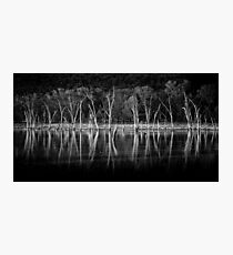 The  Beauty  Of Trees Photographic Print