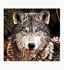 WOLF GRAY - GRAY WOLF - LOUP GRAY Photographic Print