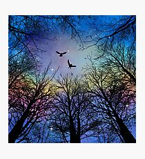 Wisdom Of The Night - Colorful II Photographic Print