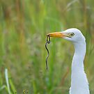 White Egret Hunting by Shaun Colin Bell