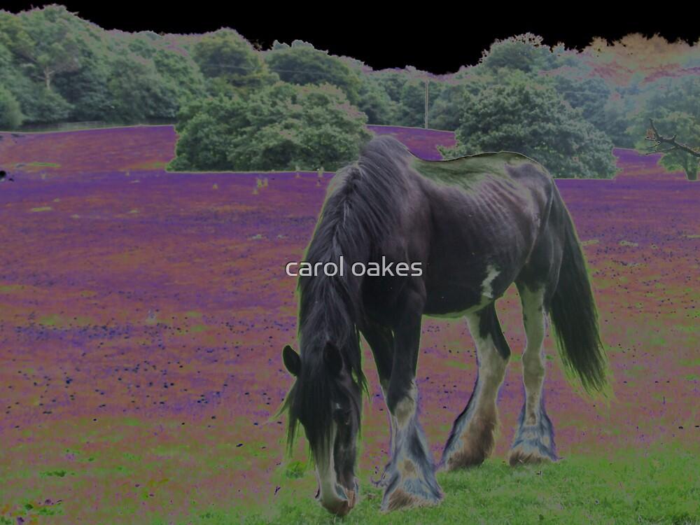 mystery horse wonderland by carol oakes