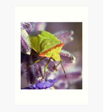 The Green bug Art Print