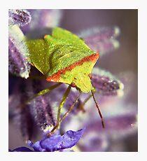 The Green bug Photographic Print