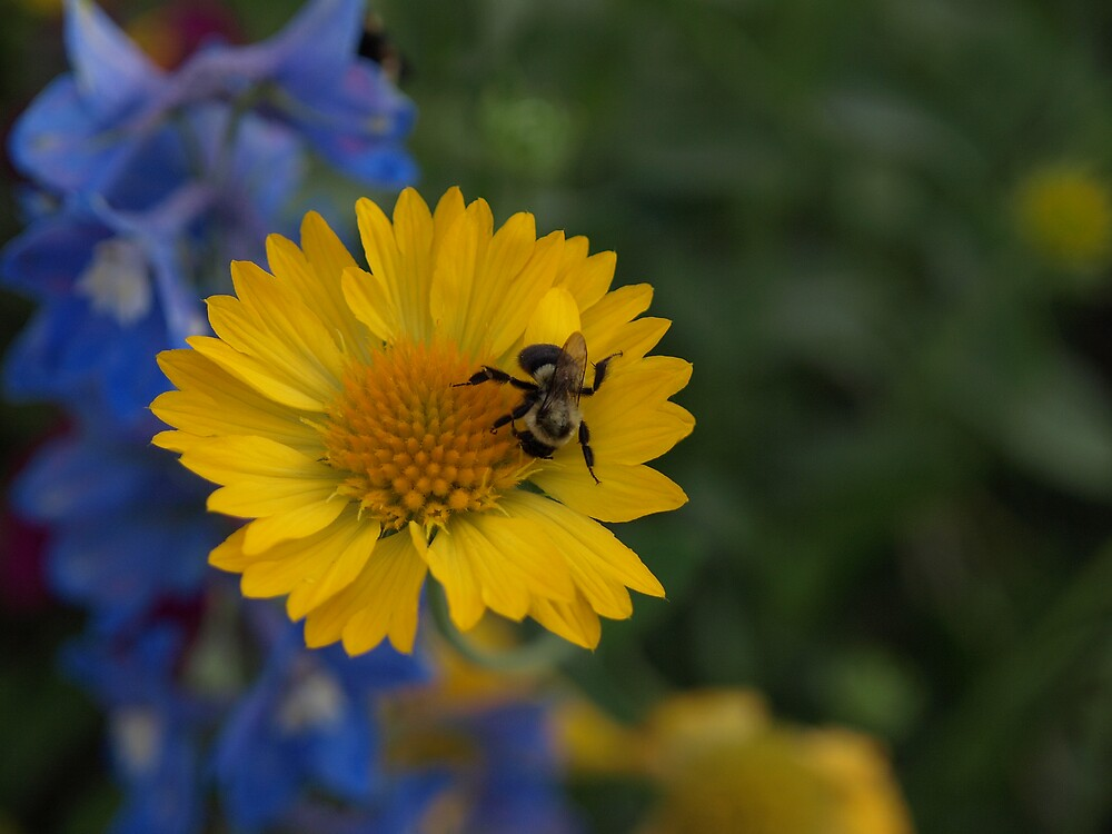 Busy bee by Mark Dugan