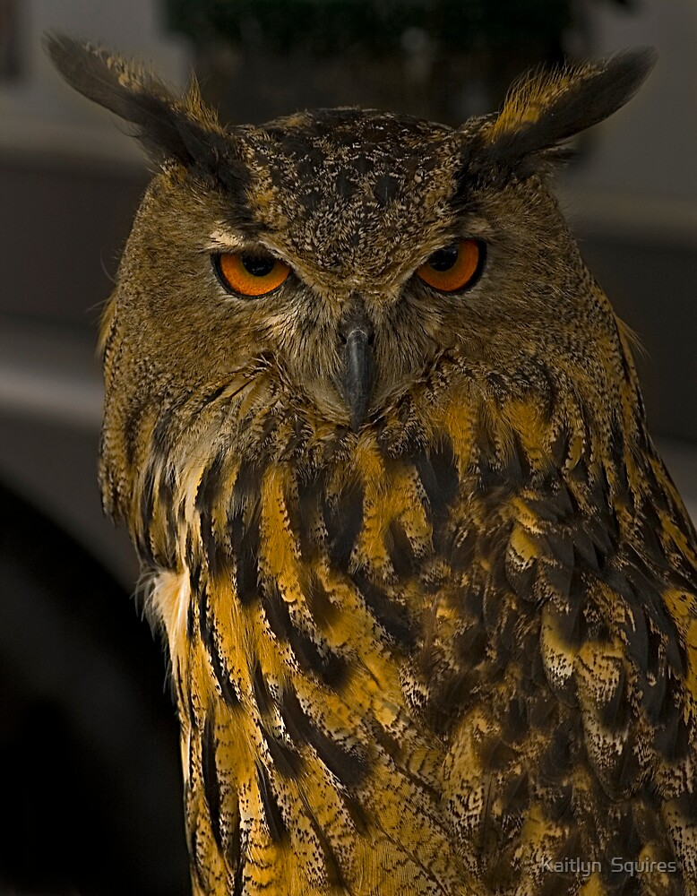 Eagle Owl by Kaitlyn  Squires