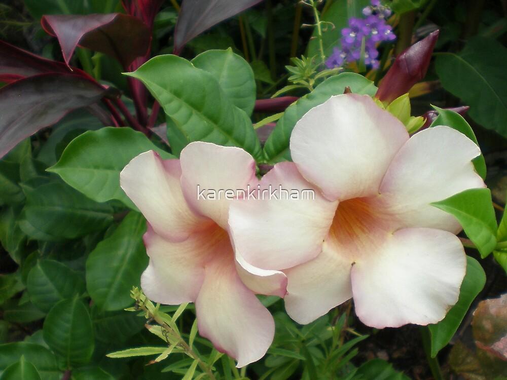Mexican flora by karenkirkham