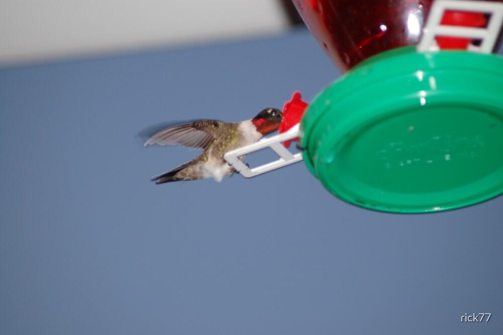 Humming bird by rick77