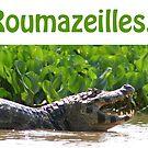 www.roumazeilles.net by Yves Roumazeilles