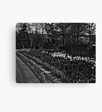 Row Of Beauty Canvas Print