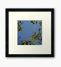 Sky Through Trees Framed Print
