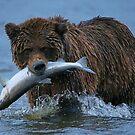 Bear Catch of the Day! by Anthony Goldman