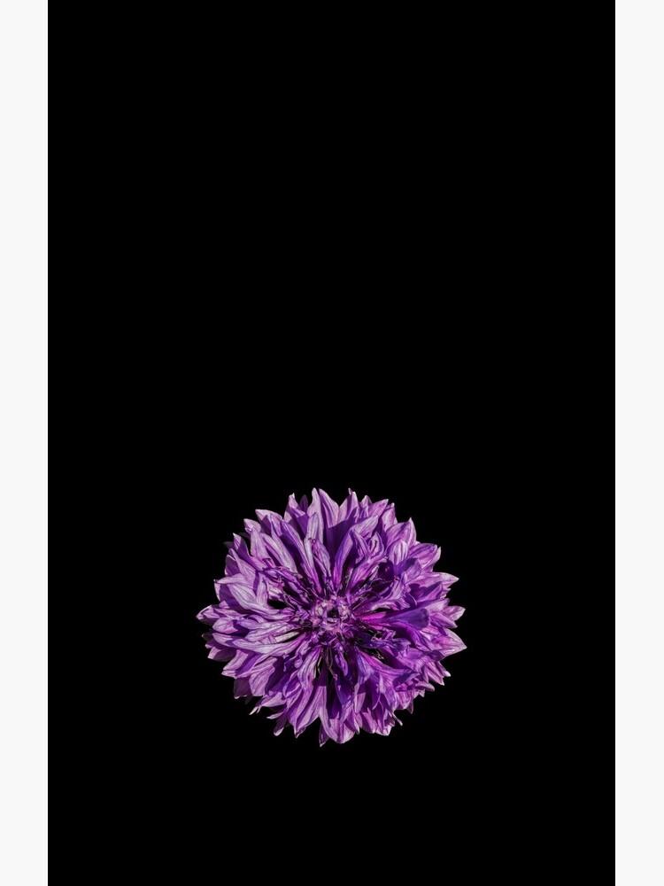 Purple cornflower by sadler2121