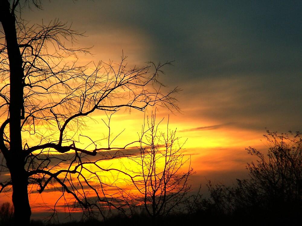 My tree by rasnidreamer