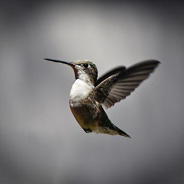 Hummingbird by venny