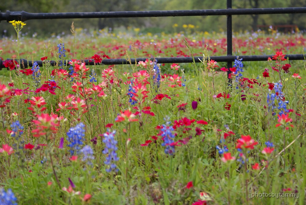 Texas Wildflowers by photosbytammy