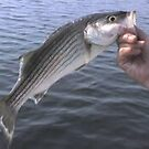 STRIPPED ROCK FISH BASS by sky2007
