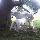 White horses by SarahTrangmar