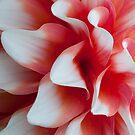 Creamsickle Waves by Rebecca Bryson