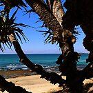 A Pandanus Tree at Corindi Beach by myraj