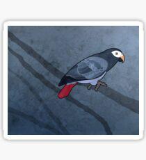 Timneh parrot (Psittacus timneh) Sticker
