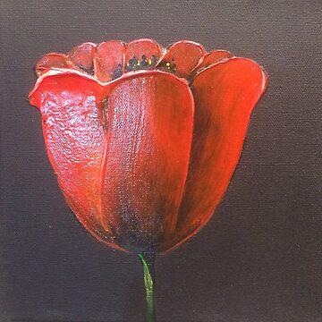 Red Tulip by LindaCorbitt