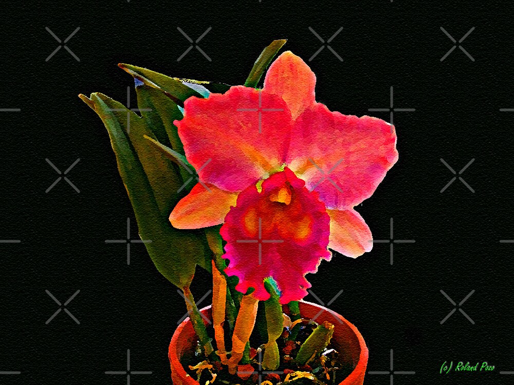 Painted Orchid by photorolandi
