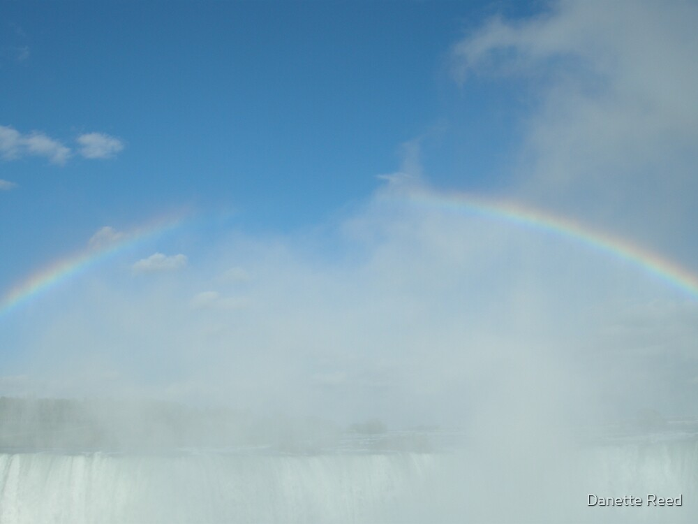 Rainbow by Danette Reed
