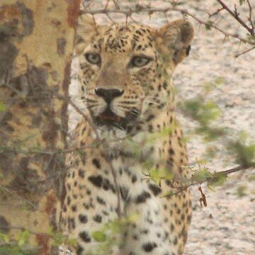 Leopard in Wait by fitch