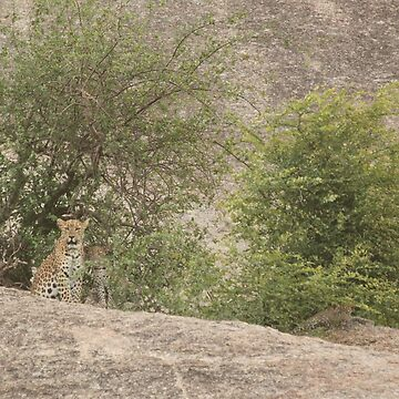 Leopard with cubs by fitch
