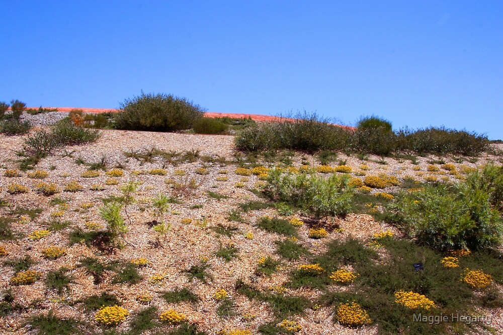Desert flowers by Maggie Hegarty