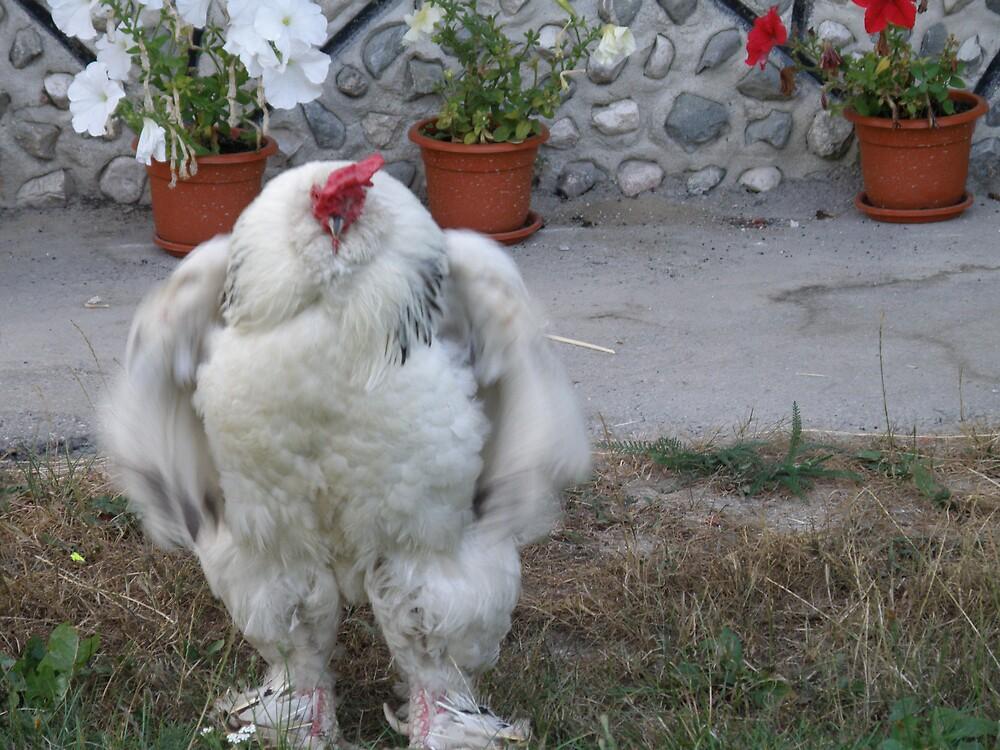 Big Cock by aquadrift