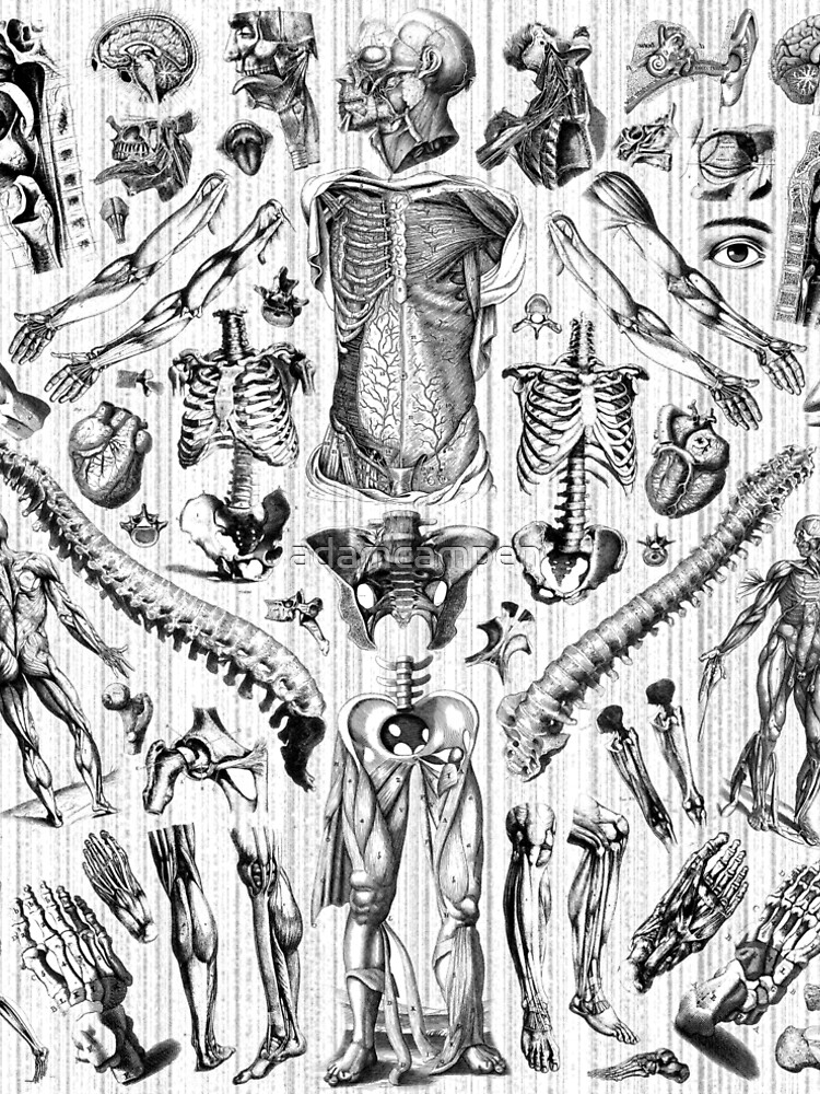 Fashion Anatomy Print (black on white)\