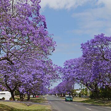 A Jacaranda Avenue by grmahyde