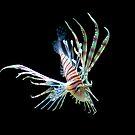 Lion Fish by Evan Sharboneau