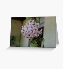 pretty flower Greeting Card