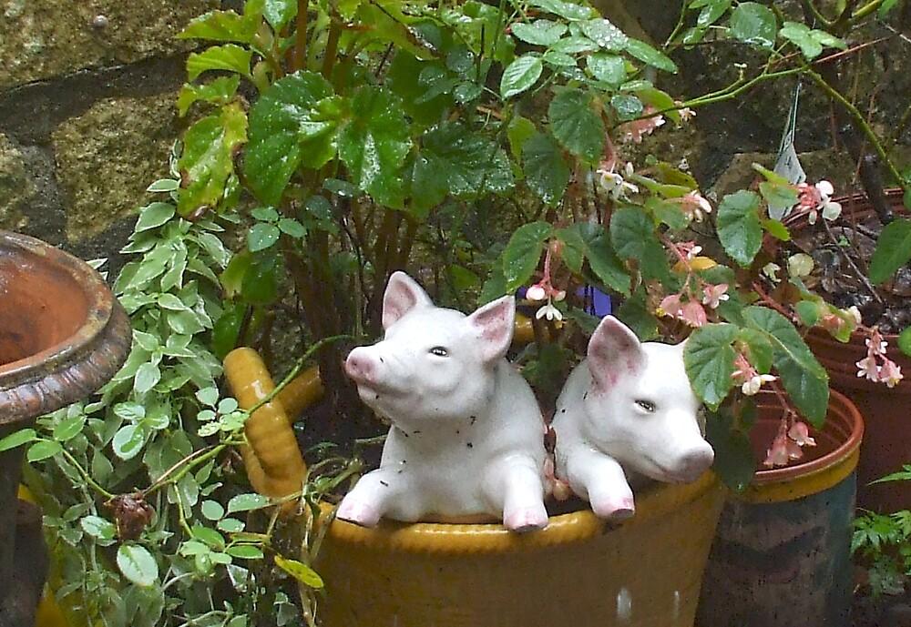TWO LITTLE PIGGYS WENT TO MARKET by Dalzenia Sams