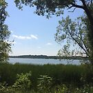 Beautiful Summer Lake Scene With Trees by silverdragon