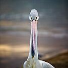 What are you looking at .... by Matt  Lauder