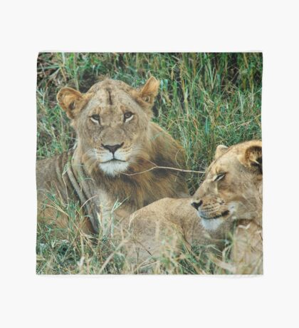 THE COUPLE - THE LION – Panthera leo Scarf