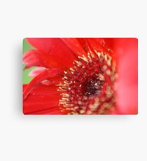 Macro flower 9 Canvas Print