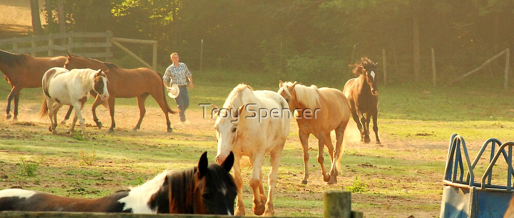 stubborn round-up by Troy Spencer