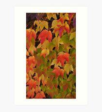 The glorious colours of autumn Art Print