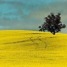 Canola Fields by Austin Dean