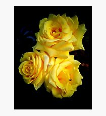 Yellow roses Photographic Print