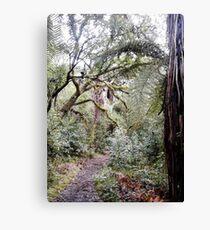 Forest walk Rotorua Canvas Print