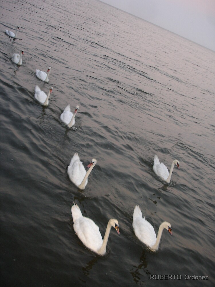 swan by BOBBYBABE