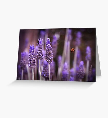 Amongst the Lavender Greeting Card
