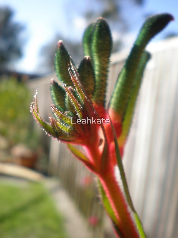 Kangaroo Paw by Leahkate