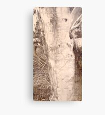 Scribbly Gum - Drawing Canvas Print